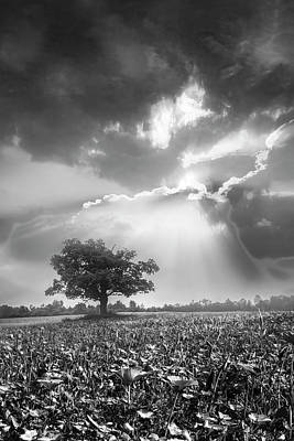 Photograph - Sunset After The Rain Black And White by Debra and Dave Vanderlaan