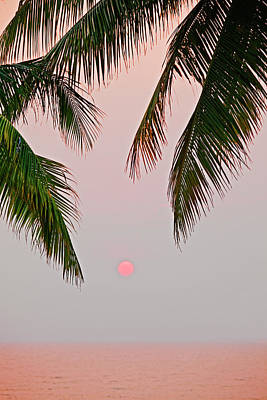 Photograph - Sunset And Palm, Koh Chang,thailand by John W Banagan