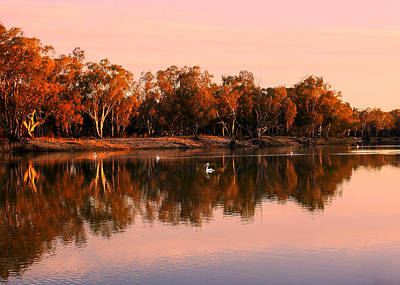Photograph - Sunset And Pelicans On The Murray by Lexa Harpell