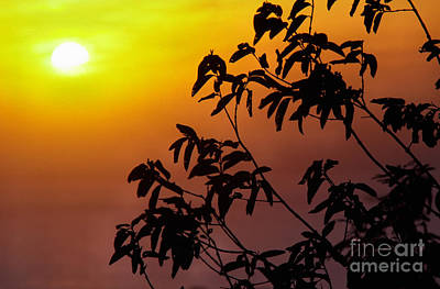 Photograph - Sunset And Tree Branches by Thomas R Fletcher