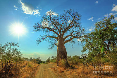 Photograph - sunset Baobab South Africa by Benny Marty