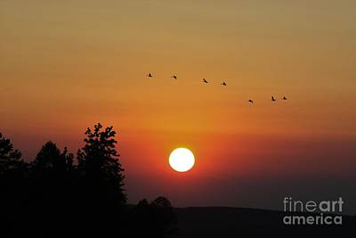 Peacock Feathers - Sunset Flight by Angela Stafford