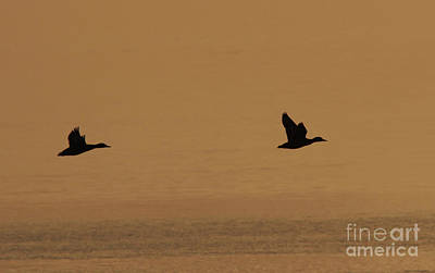 Wall Art - Photograph - Sunset Flight by Gary Wing