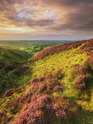 Elliott Coleman Royalty-Free and Rights-Managed Images - Sunset Heather on Llanllwni Mountain by Elliott Coleman