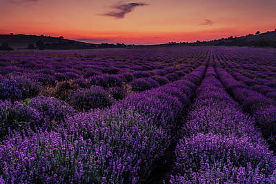 Royalty-Free and Rights-Managed Images - Sunset Lavender by Evgeni Dinev