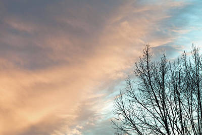 Photograph - Sunset Over Bare Trees by Debibishop