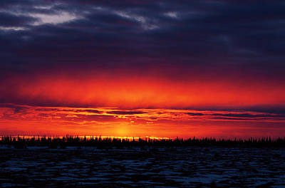 Photograph - Sunset Over Boreal Forest, Churchill by Konrad Wothe/ Minden Pictures