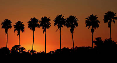 Photograph - Sunset Palm Silhouettes by HH Photography of Florida