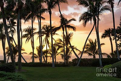 Photograph - Sunset Palms by Brian Jannsen