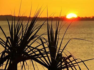 Photograph - Sunset Pandanus by Joan Stratton