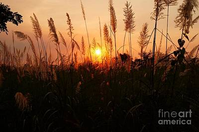 Photograph - Sunset Peeking Through The Grasses by Christopher Shellhammer
