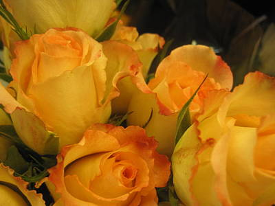 Photograph - Sunset Roses by Peggy M McAloon