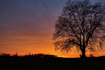 Art Print featuring the photograph Sunset Silhouette Tree by Mark Dodd