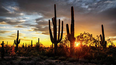 Photograph - Sunset Somewhere In The Sonoran  by Saija Lehtonen