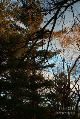 Frank J Casella Royalty-Free and Rights-Managed Images - Sunset Through the Branches by Frank J Casella