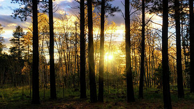 Photograph - Sunset Through The Pines  by Saija Lehtonen