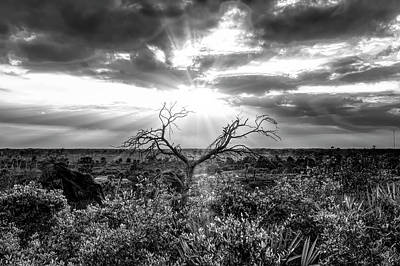 Photograph - Sunset Tree In Black And White by Debra and Dave Vanderlaan