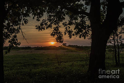 Sunset Under The Tree Art Print