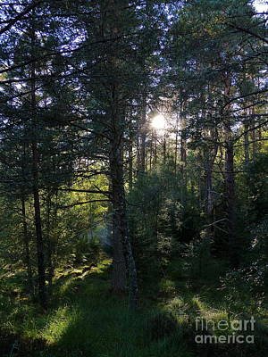 Photograph - Sunshine After Rain In The Forest by Phil Banks