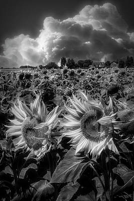 Photograph - Sunshine On A Radiant Summer Day In Black And White by Debra and Dave Vanderlaan