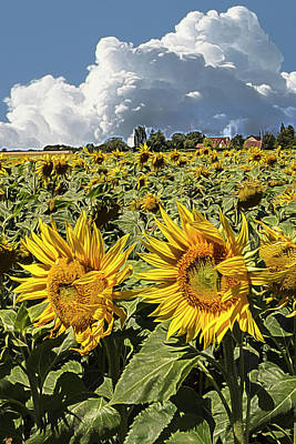 Photograph - Sunshine On A Summer Day Impressionism by Debra and Dave Vanderlaan