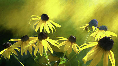 Photograph - Sunshine On Black Eyed Susan by Leslie Montgomery