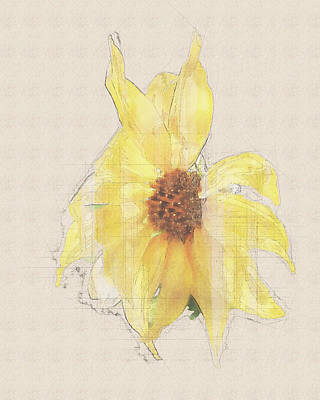 Photograph - Sunshine Sketch 2 by Jennifer Grossnickle