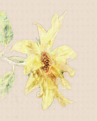 Photograph - Sunshine Sketch by Jennifer Grossnickle