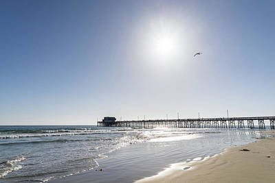 Photograph - Sunshiny Socal Beachscape With Bird - Newport Beach Pier Orange County California by Georgia Mizuleva
