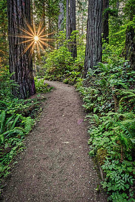 Photograph - Sunstar In The Redwood Forest by Stuart Litoff