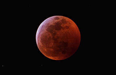 Photograph - Super Blood Wolf Moon by Larah McElroy