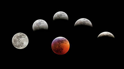 Photograph - Super Blood Wolf Moon by Van Sutherland