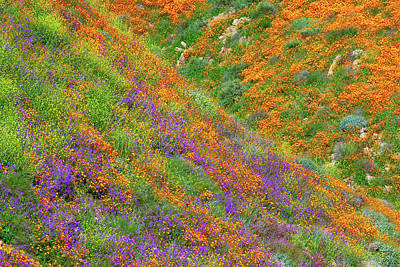 Royalty-Free and Rights-Managed Images - Super Bloom 5 by Brian Knott Photography