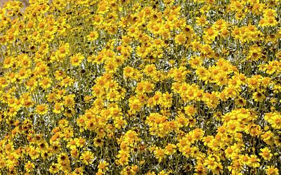 Super Bloom Paradise Joshua Tree 7295 Original