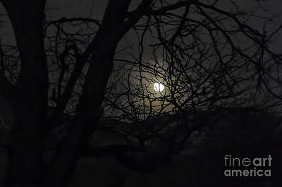 Photograph - Super Wolf Moon by Susan Warren