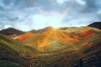 Photograph - Superbloom Sunrise by Alison Frank