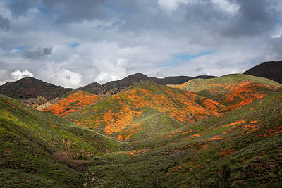 Photograph - Superbloom View by Alison Frank