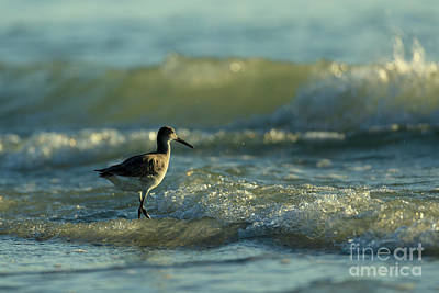 Photograph - Surf Bird  by Beve Brown-Clark Photography