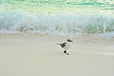 Photograph - Surfide Seagull Stroll by Jill Love