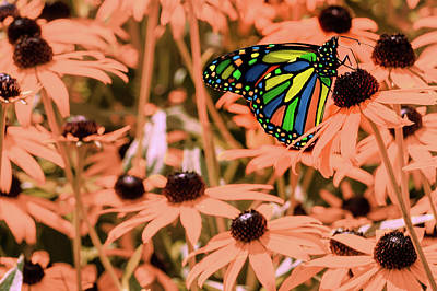 Digital Art - Surreal Monarch Butterfly On Coral Flowers by Jason Fink