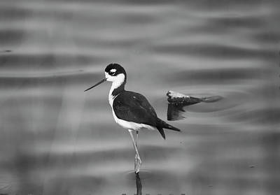 Photograph - Surreal Stilt - Black And White by Loree Johnson