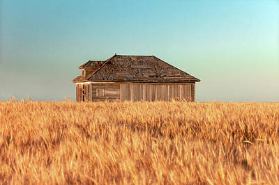 Photograph - Surrounded With Wheat by Todd Klassy