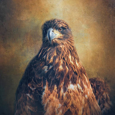 Photograph - Survivor - Juvenile Bald Eagle Art by Jai Johnson