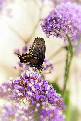 Photograph - Swallowtail Butterfly Atop Sea Lavender  by Saija Lehtonen
