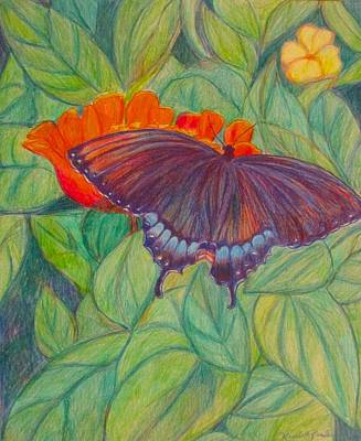 Drawing - Swallowtail by Kendall Kessler