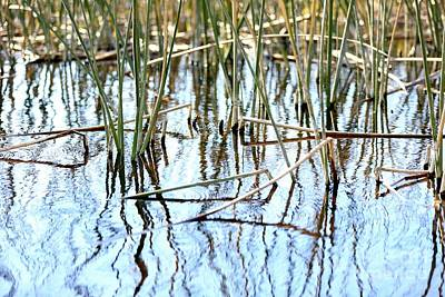 Photograph - Swamp Abstract With Reeds And Blue Water by Carol Groenen