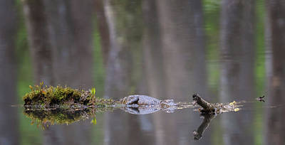 Photograph - Swamp Dreams by Susan Rissi Tregoning