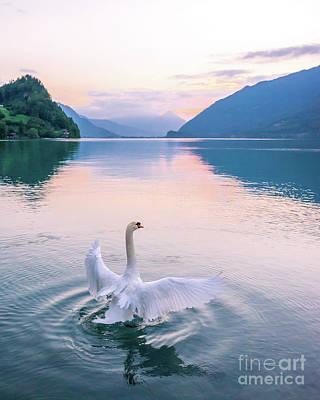 Photograph - Swan in Lake Brienz Switzerland by Christy Woodrow