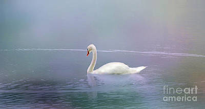 Photograph - Swan In The Fog by Elaine Manley