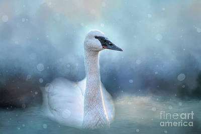 Photograph - Swan In The Winter by Ed Taylor